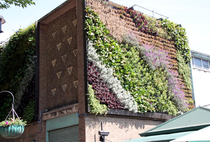 Fassadenbegrünung in London